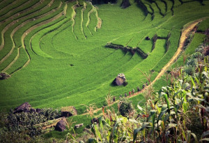 Webinar Gagasan: Masihkah Pertanian Menjaga Ketahanan dan Swasembada Pangan di Masa Pandemi?