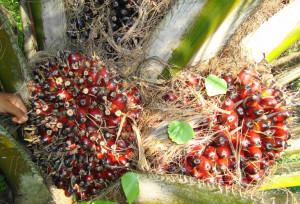 Webinar: Strategi Membangun UMKM Berbasis Kelapa Sawit di Era Pandemi
