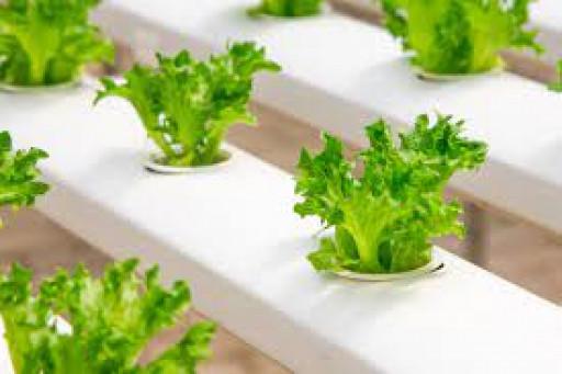 """Webinar: """"Ingin Tanam Sayuran di Lahan Terbatas? Hidroponik Solusinya"""""""