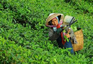 Petani Negeri Sendiri (PNS) untuk Sebuah Profesi Kebanggaan