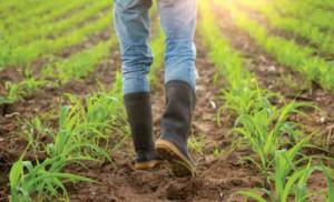 Mengajak Anak Muda Bertani Solusi Jangka Pendek atau Panjang?