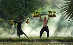 Kolaborasi dan Sistem Kemitraan, Jalan Emas Generasi Muda Memulai Jadi Petani