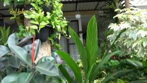 Peran Influencer Terhadap Minat Bertani Pada Anak Muda