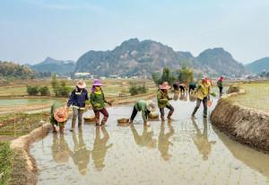 Menggagas Integrasi Fintech Syariah Sektor Agri