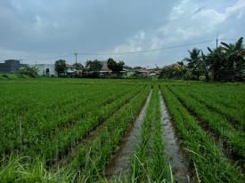 Geliat Pertanian Perkotaan, Kecambah Tumbuh Subur di Lahan Terbatas