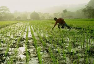 Regenerasi Petani Berbasis Smart Farming 4.0, Kunci Kemajuan Sektor Pertanian di Masa Depan