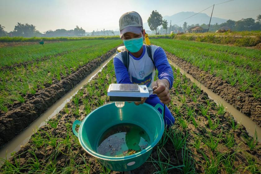 Bertani Masa Kini, Penggunaan Lampu Perangkap Serangga Bertenaga Surya
