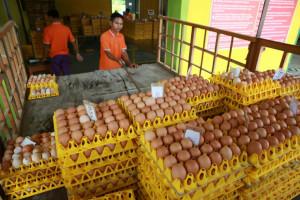 Berdayakan Masyarakat Sekitar, Kusno Bangun Usaha Telur Herbal Berproduksi 3 Ton Per Hari