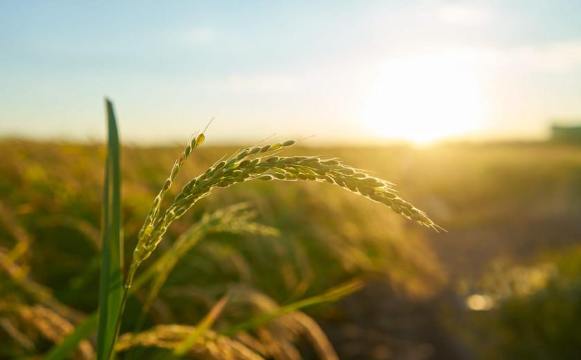 Pertanian, Teknologi dan Anak Muda