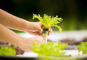 Integrated Indoor Farming, Solusi Pertanian Masa Depan Indonesia