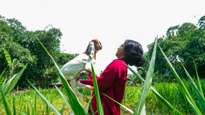 Peternak Desa Berjaya, Inilah Konsep Swasembada Daging 2026 dari Breeding Kambing Lokal