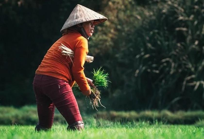 Teknologi Blockchain dan Peningkatan Daya Saing Produk Pertanian Indonesia