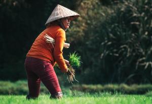 Pilihan Strategi Regenerasi Petani, Membudayakan Bertani Ataukah Membisniskan Pertanian?