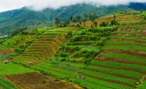 Krisis Pangan di Depan Mata: Apa yang harus dilakukan Indonesia?