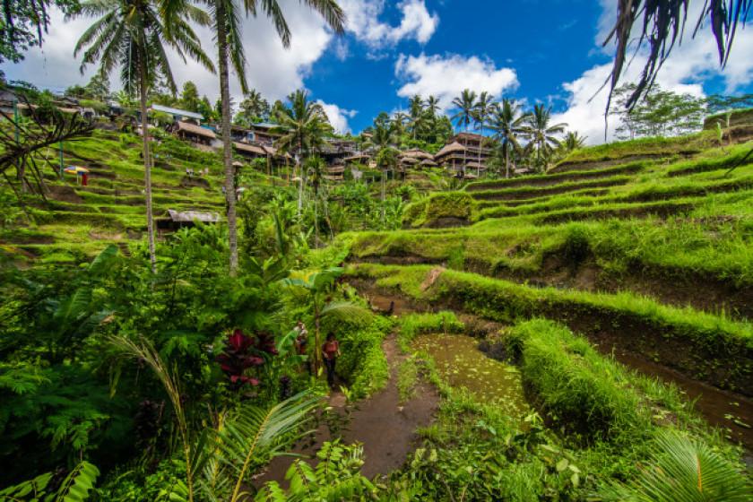 Minifarm: Inovasi Kebun Sederhana Sebagai Solusi Aplikatif Bagi Konservasi Tanah dan Air di Pekarangan Rumah Berbasis Agroforestry