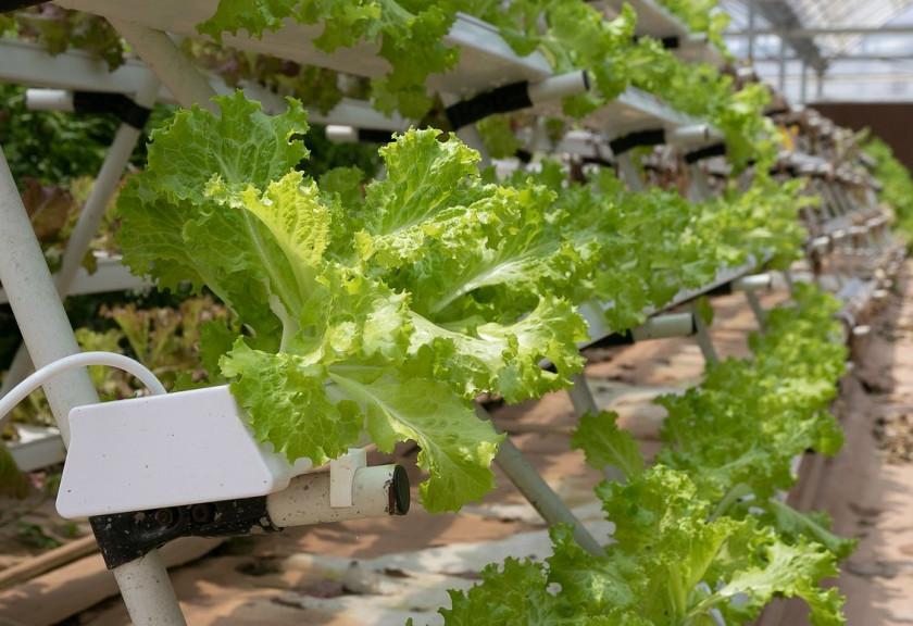 Padu Padan Vertical Farming dan Kultur Jaringan