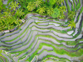 Bersiap Menghadapi Krisis Lingkungan melalui Pertanian Organik
